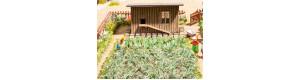 Zeleninová zahrada, H0, Noch 14107